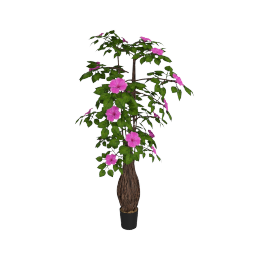 Bougainvillea Tree in Pot 183 cms