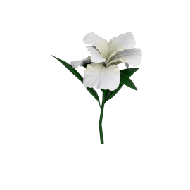 Cattleya Spray, White