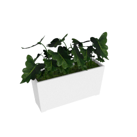 Greenery Caladium Bonsai - 37x18x25 cms