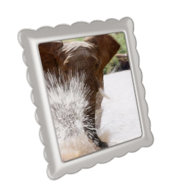Stefano Photo Frame - 8x10 inches