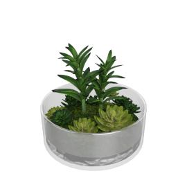 Succulent Plant- 23x9x11 cms