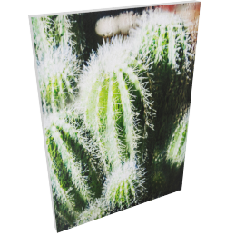 Cacti Printed Canvas