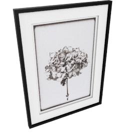Scott Dunwoodie - Hydrangea Framed Print, 68 x 51cm