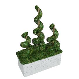 Sorgo Spiral in Planter - 90cm