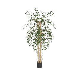 Curvy Ficus Trunk Tree 180 cms