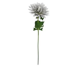 Single Dahlia 87 cms, Cream