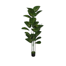 Pothos Tree in Pot 152 cms