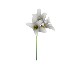 Single Amaryllis Spray, White