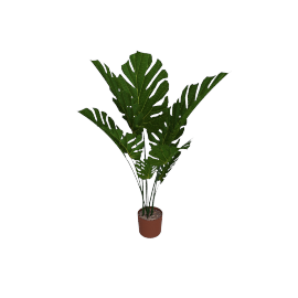 Monsteria Plants 122 cms