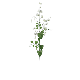 Sweet Pea - 79 cms, White