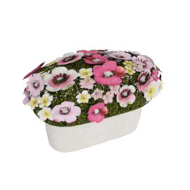 Constancy Anemone Oval Base 30 cms