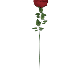 Real Touch Rose Stem 71 cms, Red
