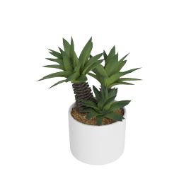 Cactus Plant in Round Pot