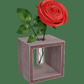 Rose in Glass Tube
