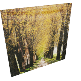 Iris Spring Canvas Print Wall Art - 80x3x80 cms