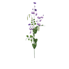 Sweet Pea - 79 cms, Purple