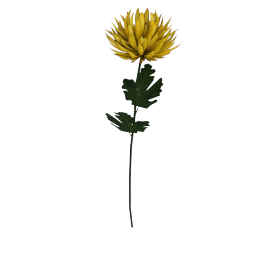 Single Mum Stem, Yellow