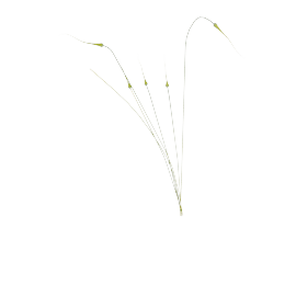 Garlic Chives 114 cms